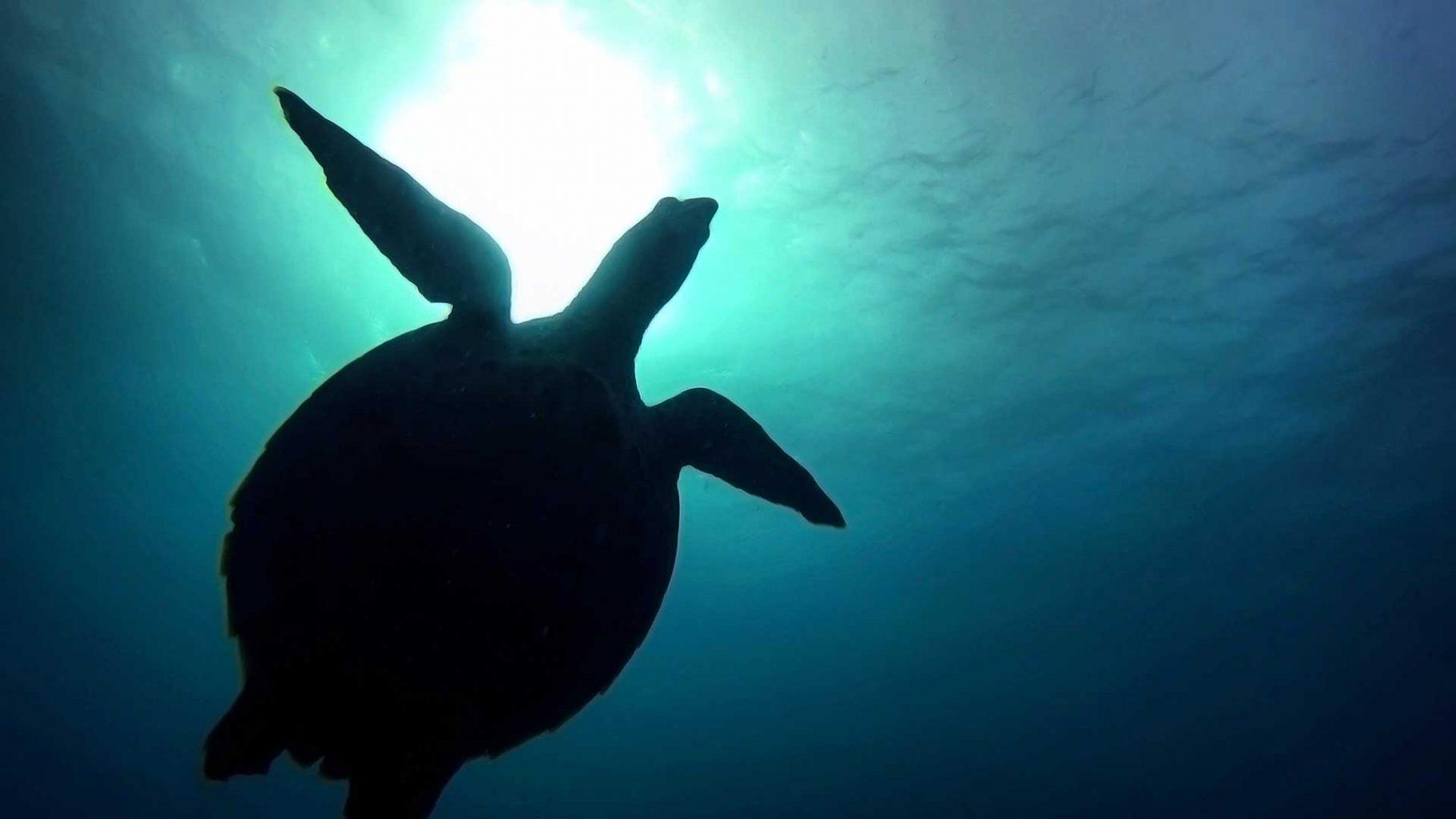 Diving with Blue Ocean Dive Resort, July 2017